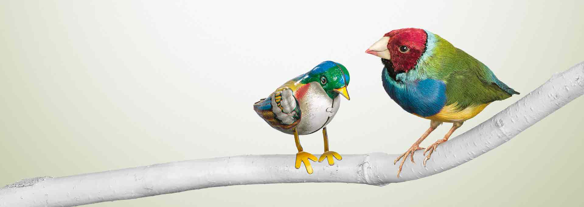 A tin bird stitting on a branch next to a real bird symbolizing the difference of other hearing aid technology to Bernafon Viron.