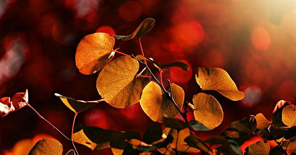 sposoby_na_jesienna_chandre_w_tekscie_2