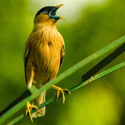 birds-chirping