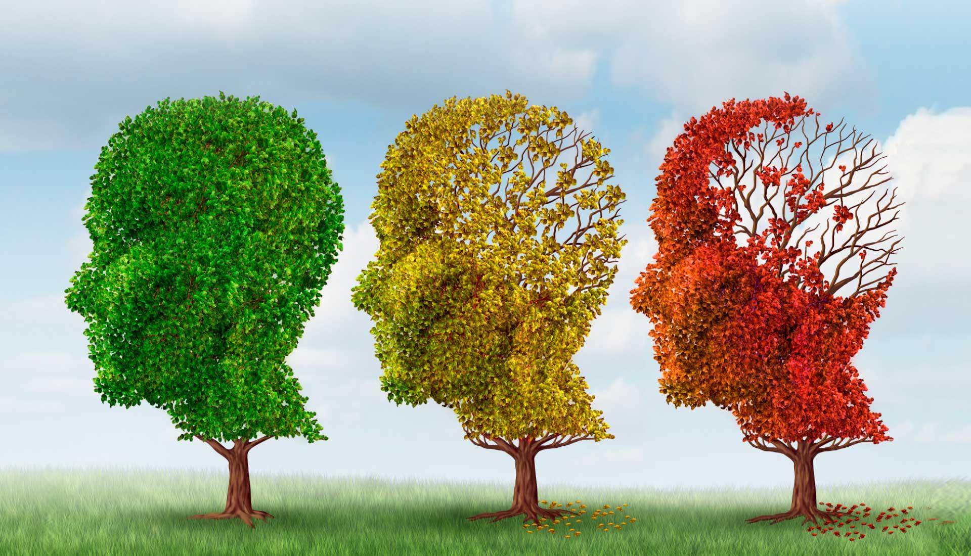 illustration d'arbres montrant des têtes de différentes couleurs
