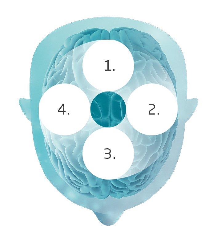 schema fonctionnement audition dans le cerveau