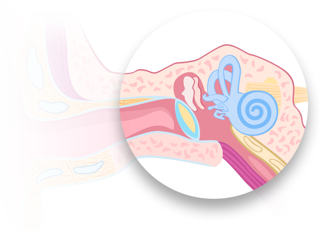 Grafika przedstawiająca ucho wewnętrzne